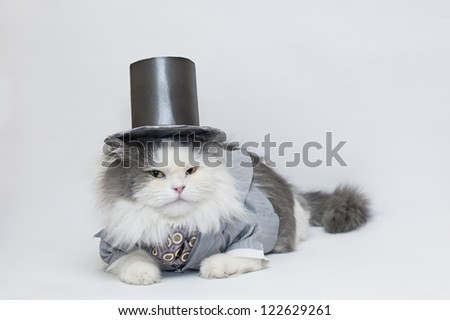 intelligent cat in a suit and a place for information