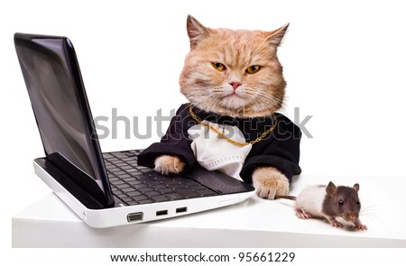 intelligent cat with a mouse for the laptop.Animal in the academic robes on a white background.financial success