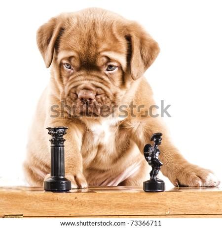 Intelligent puppy