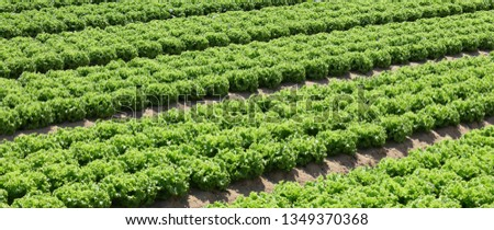 Intensive-cultivation Images and Stock Photos - Avopix com