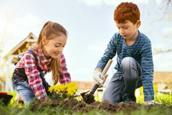 Interesting activity. Cheerful positive girl planting flowers while being together with her brother