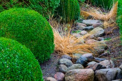 Interesting background texture of green shrubs and trees on pebble soil, on gravel, stone fern tree is used to decorate house, garden, park, office, landscape