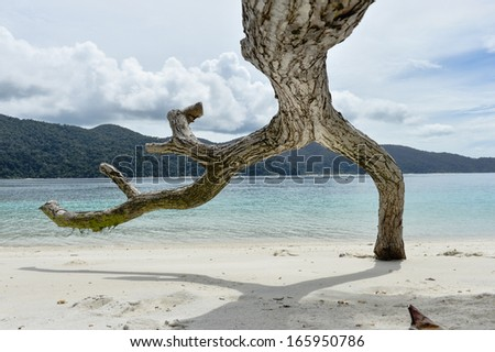 Interesting dead tree on tropical beach, Thailand