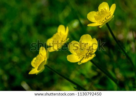 Free photos yellow flower with 4 petals avopix interesting detail in nature four yellow flowers up close and green grass in the background mightylinksfo