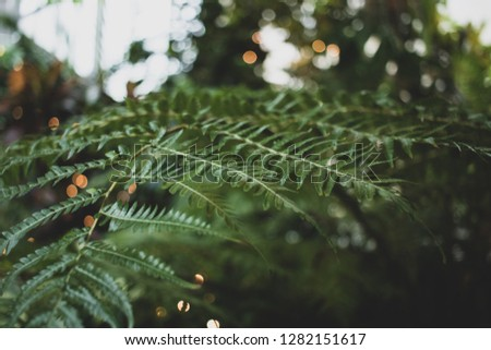 Interesting stylish closeup of a green tropical fern plant in a conservatory  #1282151617
