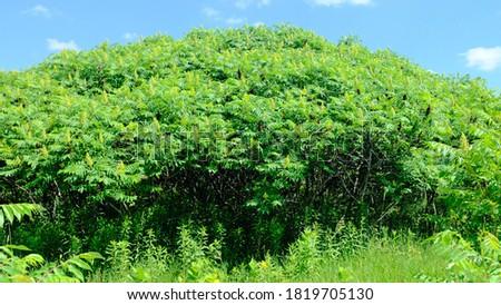 Interesting tree canopies along the Elm Creek Hiking Trail  Stock photo ©