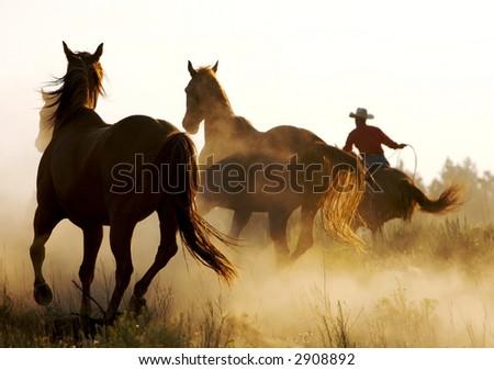 Interferire i cavalli - stock photo