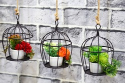 Interior decoration and garden decor. Three pots with colorful lush flowers on hanging metal stands against the wall.