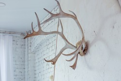 Interior decoration - deer antlers on the wall. Scandinavian style in the house. Comfort in the house.White brick wall