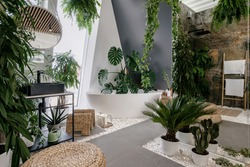 Interior design in urban jungle style. Modern bathroom decorated with green tropical plants and wicker home decor elements. Freestanding white tub, shower space and wash basin inside bohemian restroom
