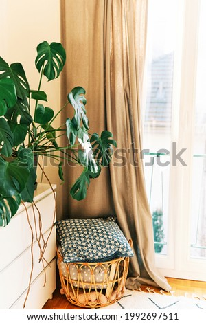 Interior design, Monstera plant growing in pot next to window