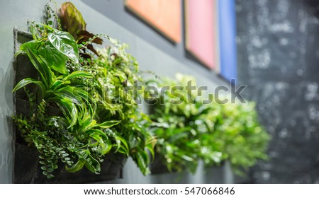 Interior greenery in grey frames  #547066846