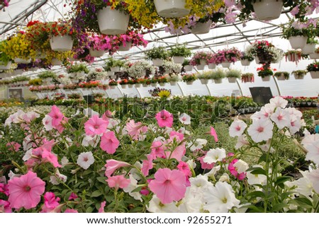 Interior of a retail greenhouse
