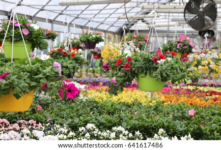 interior of a wide greenhouse with sale of plants and flowers in spring Сток-фото ©
