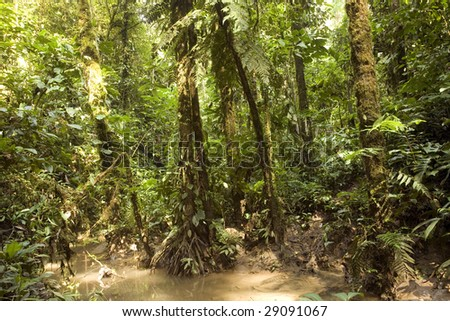 Interior of Amazonian rainforrest in Ecuador at the edge of a creek