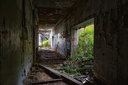 Interior of an abandoned building overgrown with greenery
