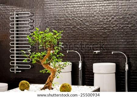 interior of big bathroom with bonsai tree bonsai tree interior