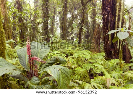 Interior of humid cloudforest on the coastal range in western Ecuador