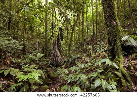 Interior of tropical rainforest, Ecuador - stock photo