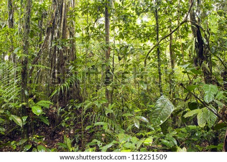 Interior of tropical rainforest in Yasuni National Park, Ecuador - stock photo