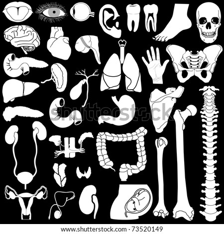 Internal organs in white and black colors, illustration