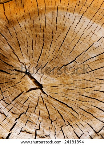 Internal tree structure