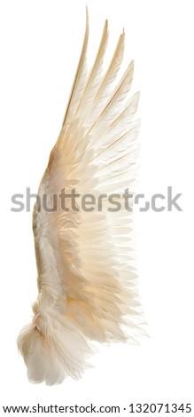 Internal white wing plumage. Isolation.