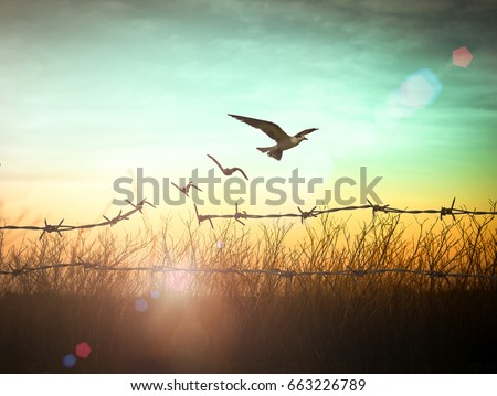 International day for the remembrance of the slave trade and its abolition concept: Silhouette of bird flying and barbed wire at autumn sunset background #663226789