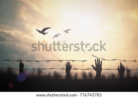 International human right day concept: Silhouette refugee hands raising and barbed wire on sunset background