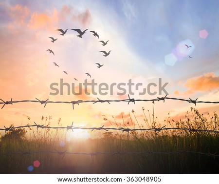 International human rights day concept: Silhouette many birds flying in shape of heart and barbed wire on sunset background #363048905