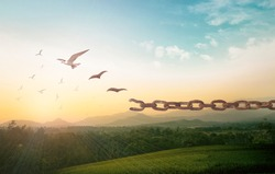 International human rights day concept: Silhouette of bird flying and broken chains at autumn mountain sunset background
