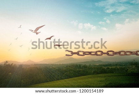 International human rights day concept: Silhouette of bird flying and broken chains at autumn mountain sunset background #1200154189