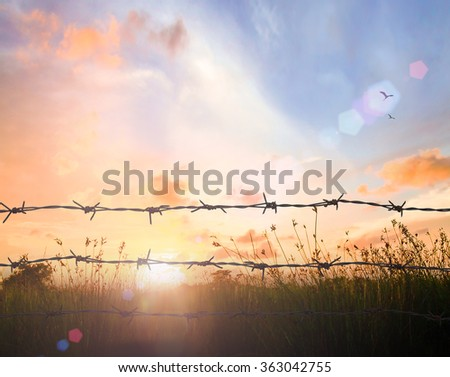 International migrants day concept: Barbed wire on autumn meadow sunset background #363042755