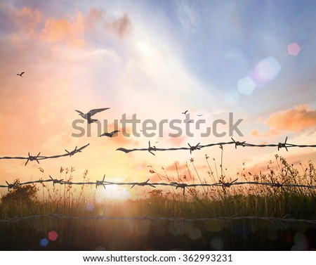 International migrants day concept: Silhouette of bird flying and barbed wire over autumn sunset background #362993231