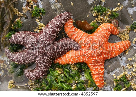 Interracial Starfish Couple