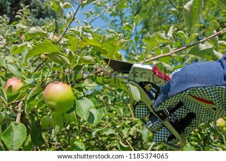 Intersect fruit tree