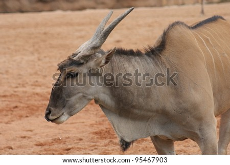 Intimate imagery within a herd of Waterbuck - Kobus ellipsiprymnus