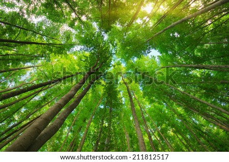 Into the forest. Nature composition.