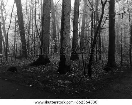 Into the Woods #662564530