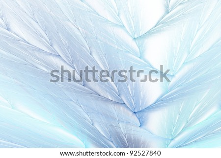 Intricate Blue feather design on white background