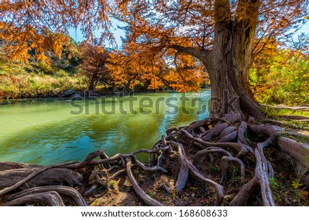 Cypress Tree Roots House Cypress Tree Roots With