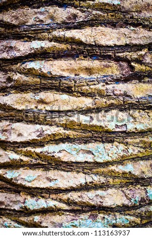 Intricate tree bark pattern as a textured background