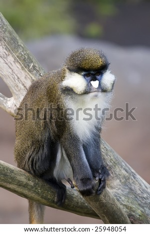 Intrigued Monkey