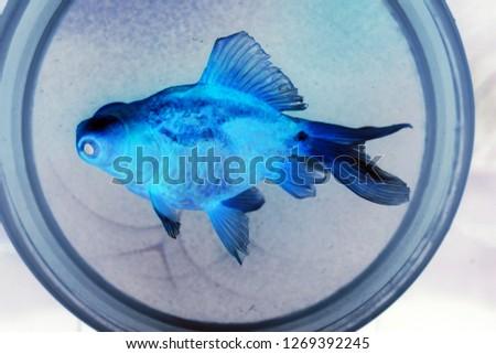 Invert colors of a gold fish