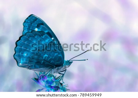 Invert effect applied on a photo of a butterfly.