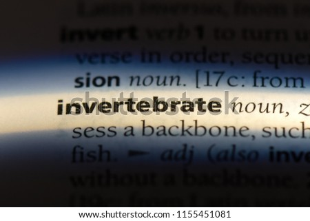 invertebrate word in a dictionary. invertebrate concept. #1155451081