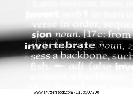 invertebrate word in a dictionary. invertebrate concept. #1158507208