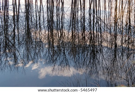 inverted world of water reflection (spring trees and clouds on sky)