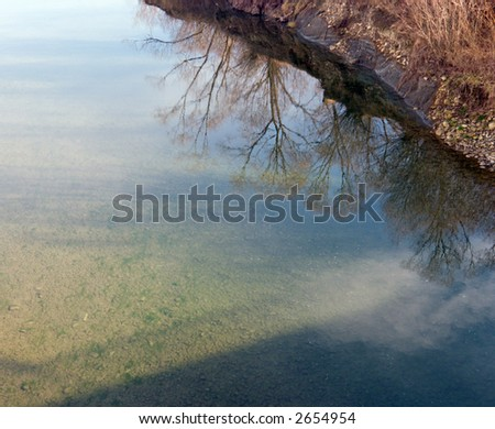 inverted world of water reflection (spring trees and sky)