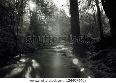 Invisible Infrared Photons Penetrate Foggy Forest To Illuminate A Mountain Steam With Beautiful Lens Flare, Black And White Infrared Photography